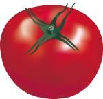 マイナスカロリーのトマト
