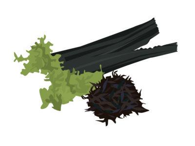 ゼロカロリーの海藻