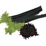 食物繊維が豊富な昆布